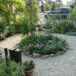 夏花壇 植栽入れ替え